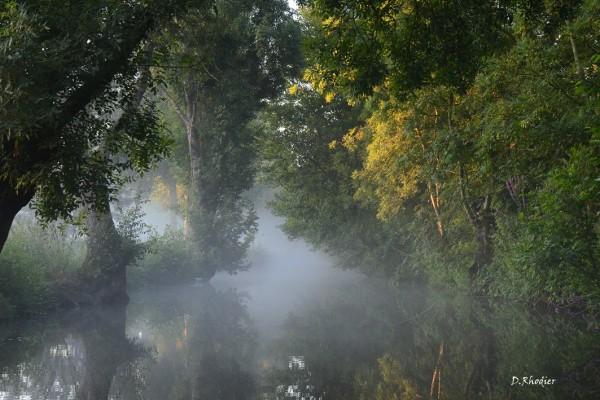 Beauté du marais aux aurores