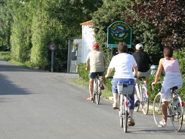 Location de vélo pour promenade dans la Venise Verte