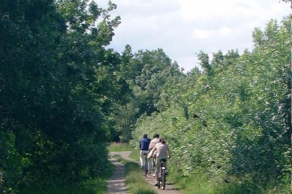 A l'ombre des peupliers à vélo le long des chemins de halage